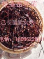 枝�l蜜�h菌